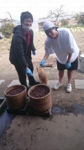 味噌になる前の大豆